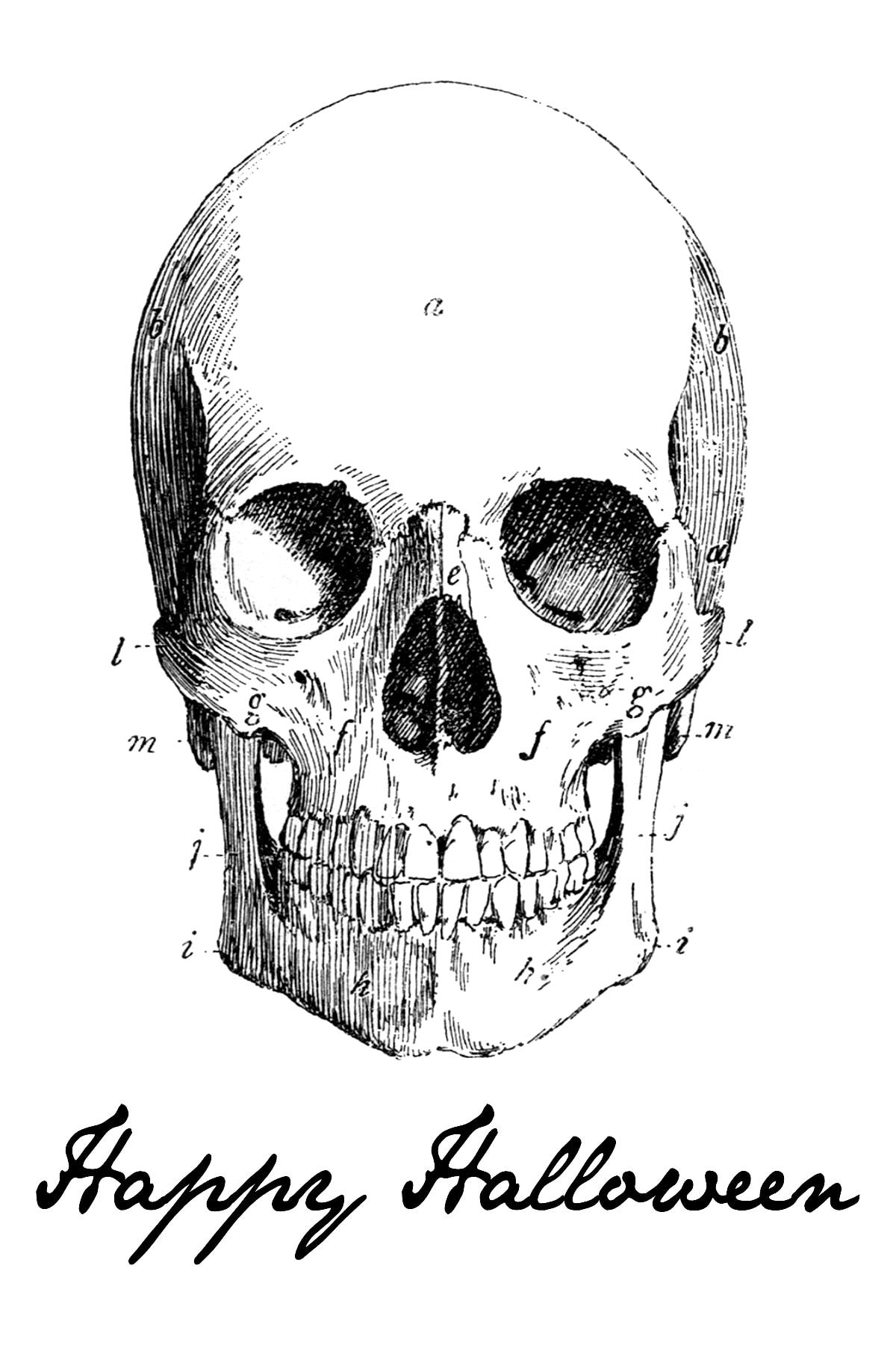 Happy Halloween Skeleton Print on { lilluna.com } Use for so many ideas!